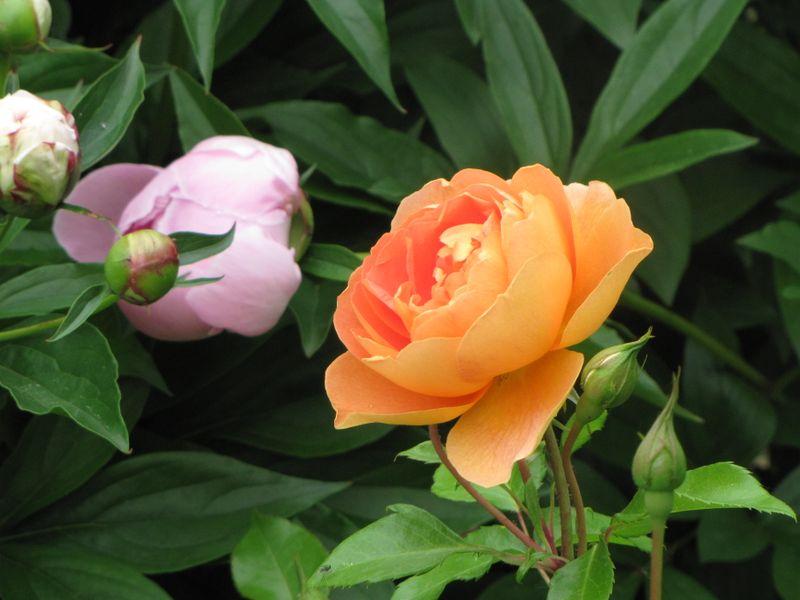Blooms June 7 2009 007