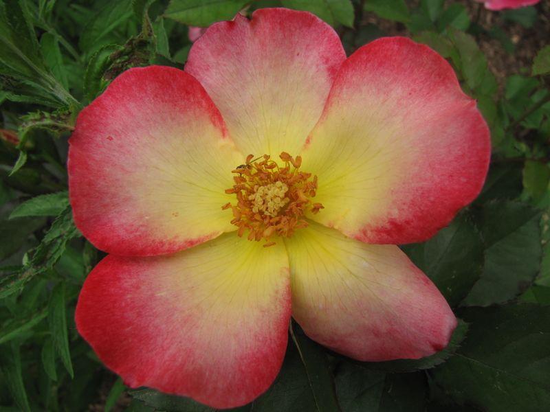 Blooms June 7 2009 003