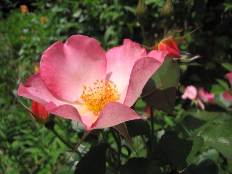 Garden June 10 09 009