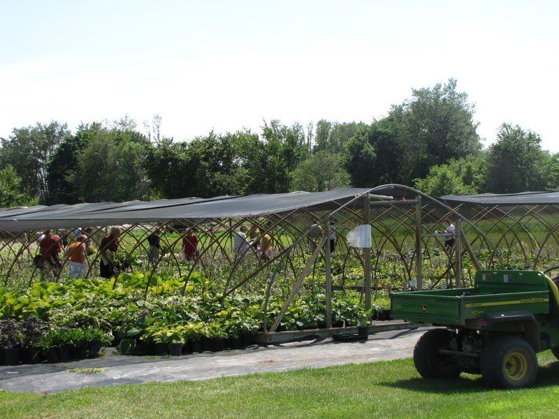 Hosta Tour K Gardens 013