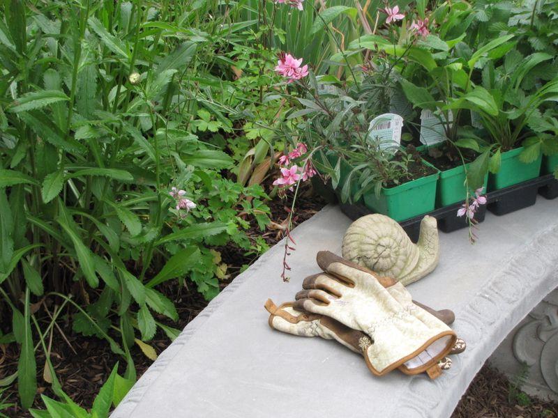 Garden June 17 09 007