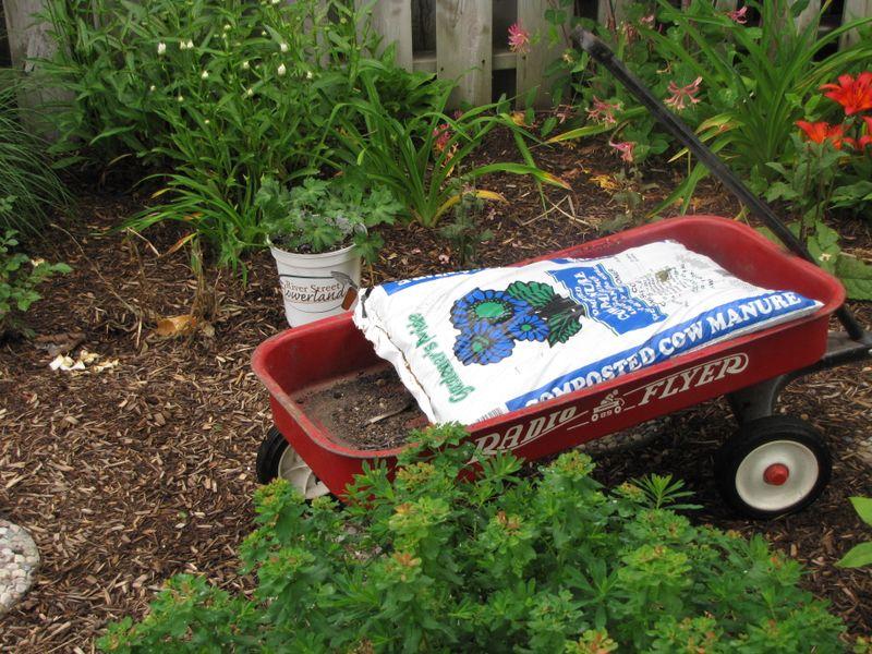 Garden June 17 09 018