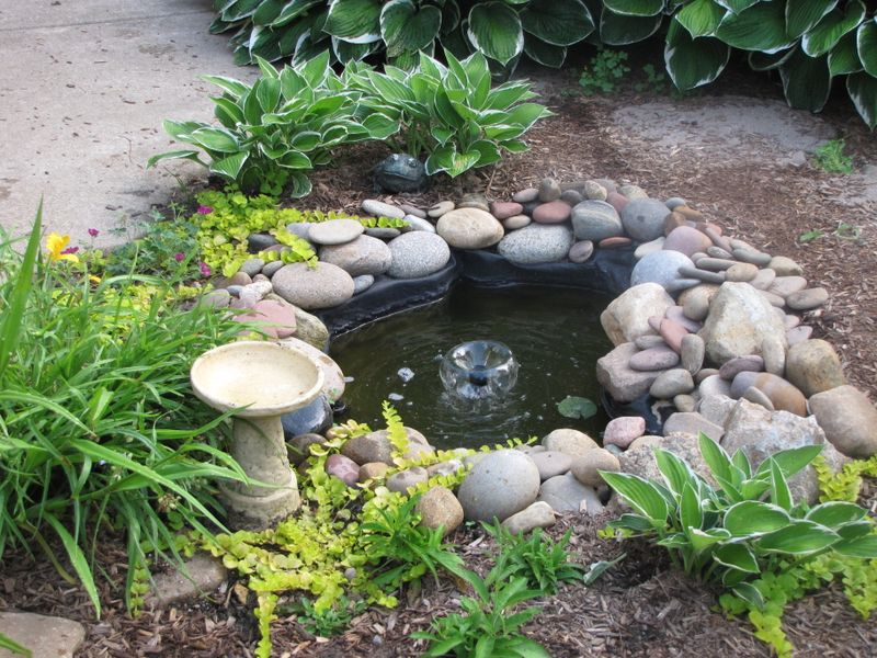The Pond June 25 09 006