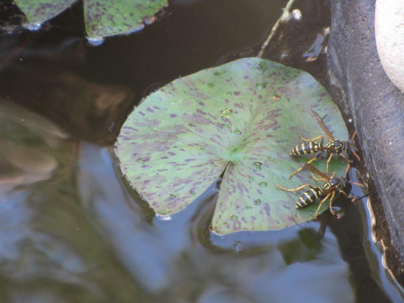 Wasp Landing Pad June 24 002