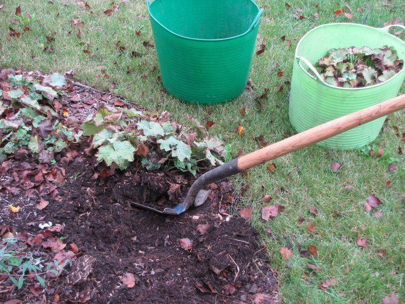 Fall gardening 092609 003