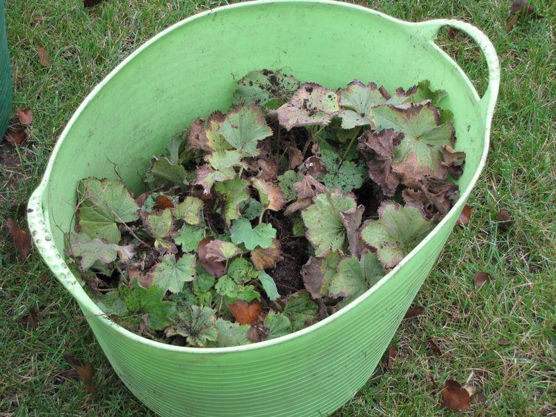 Fall gardening 092609 005