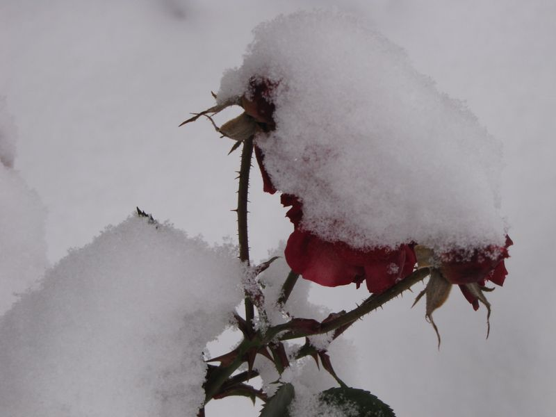 Winter interest 020