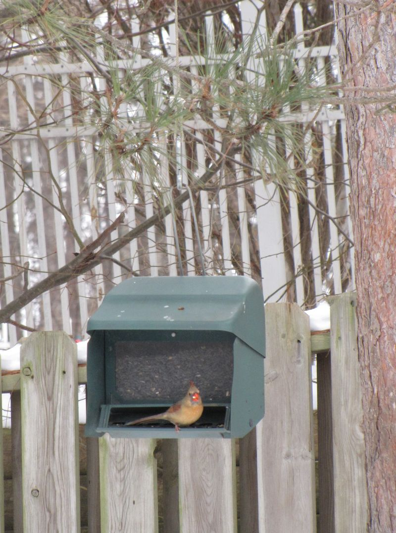 Birds and squirrels 008