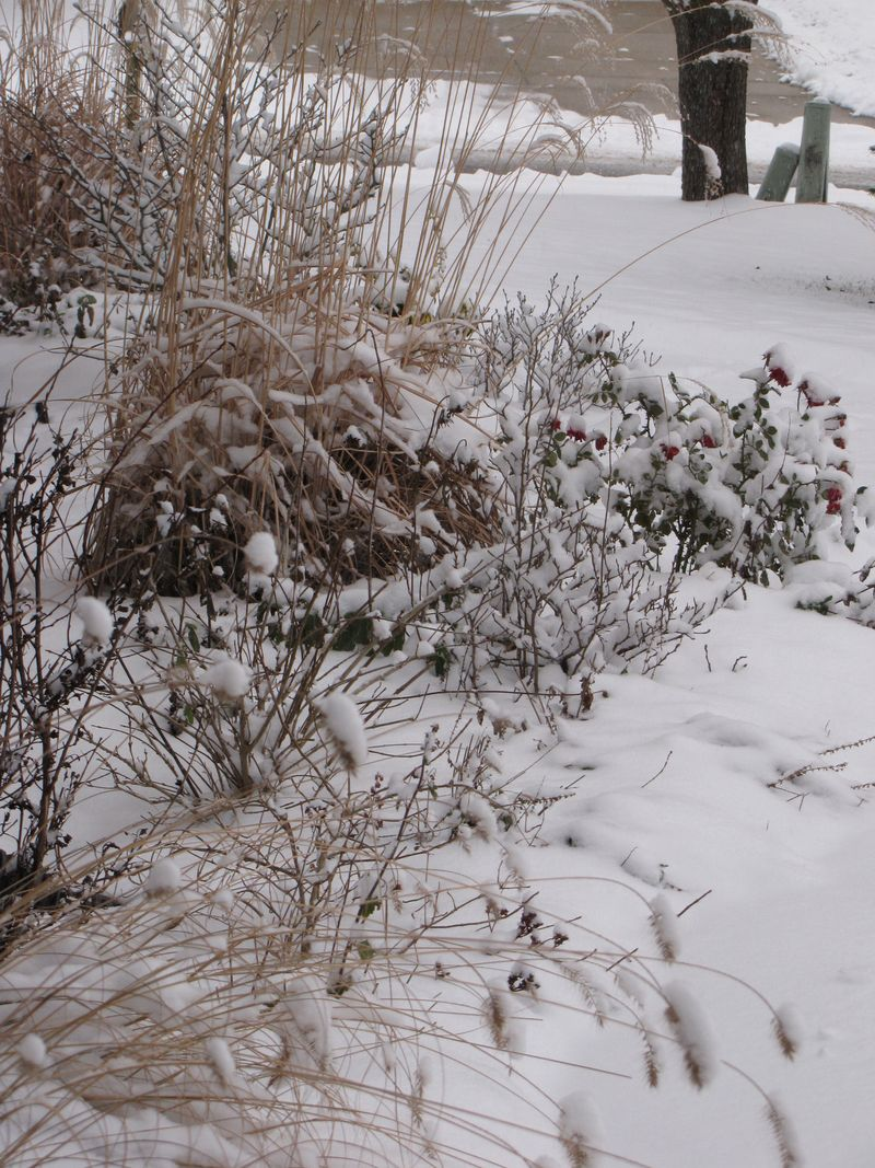 Winter interest 018