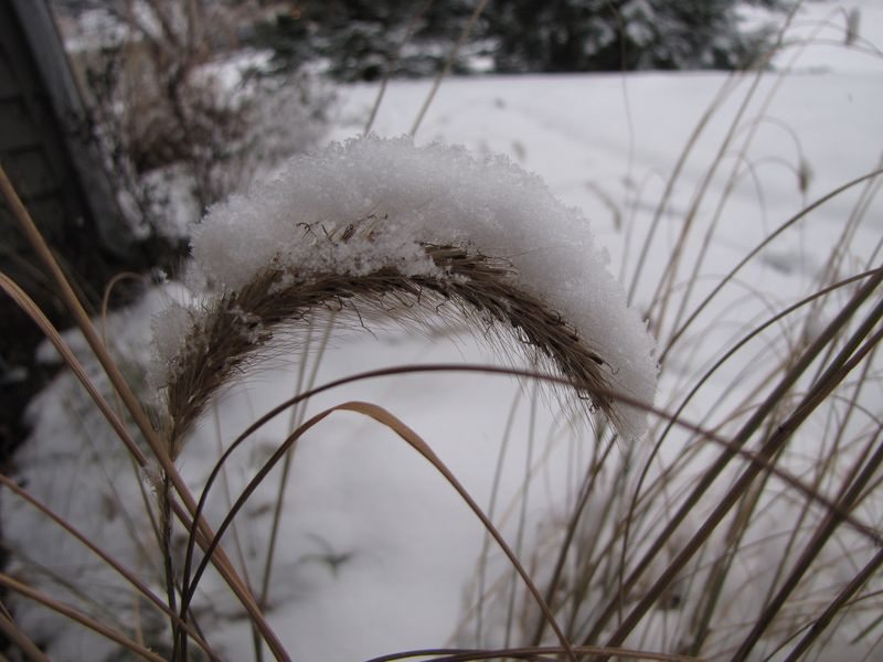 Winter interest 015