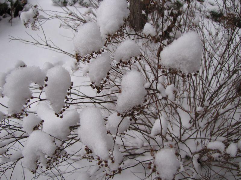 Winter interest 009