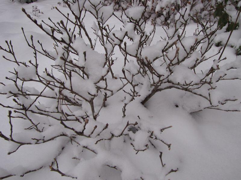 Winter interest 001