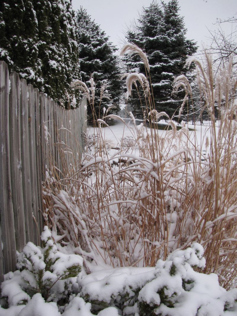 Winter interest 025