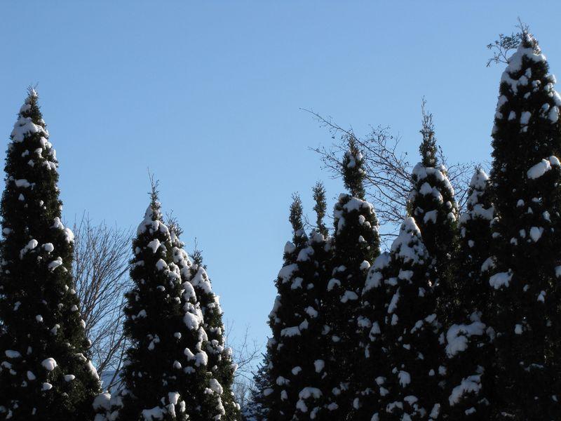 Blue skies 004