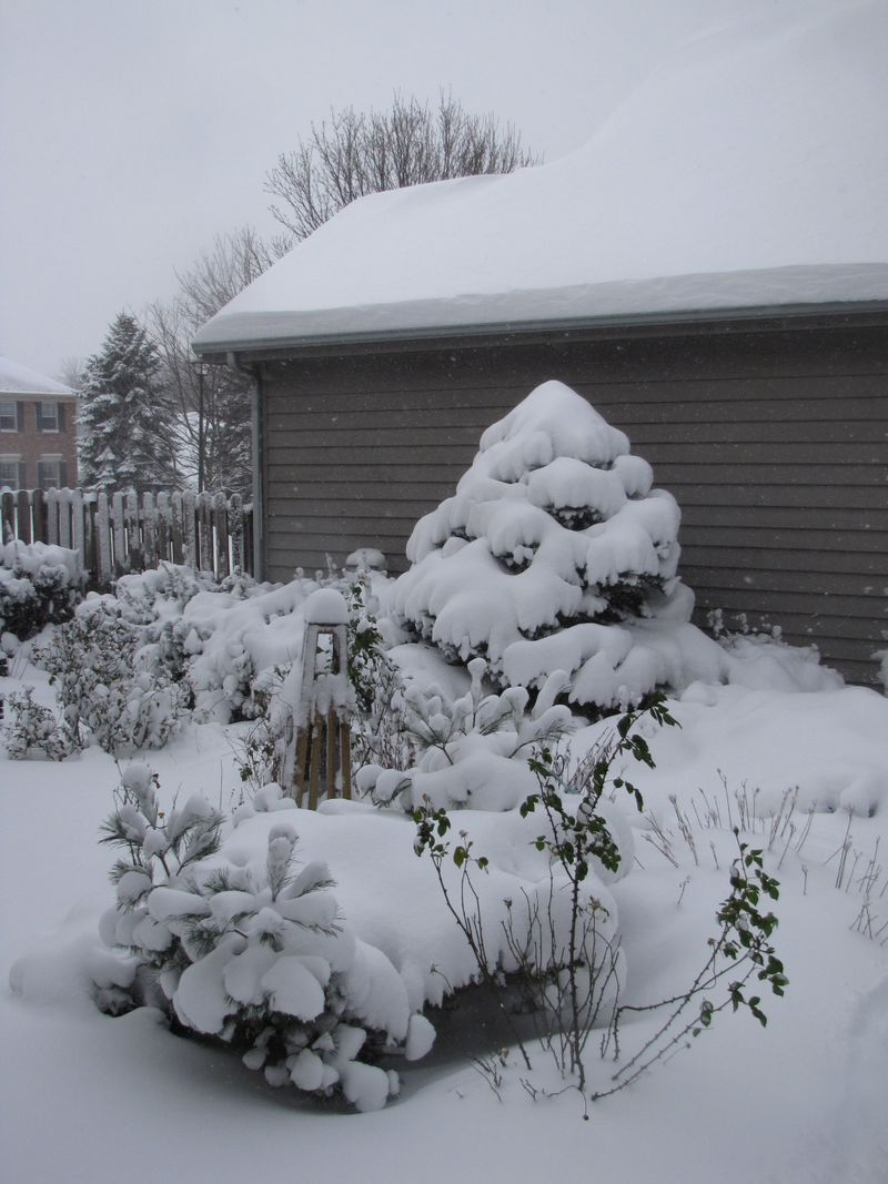 Snow day 041
