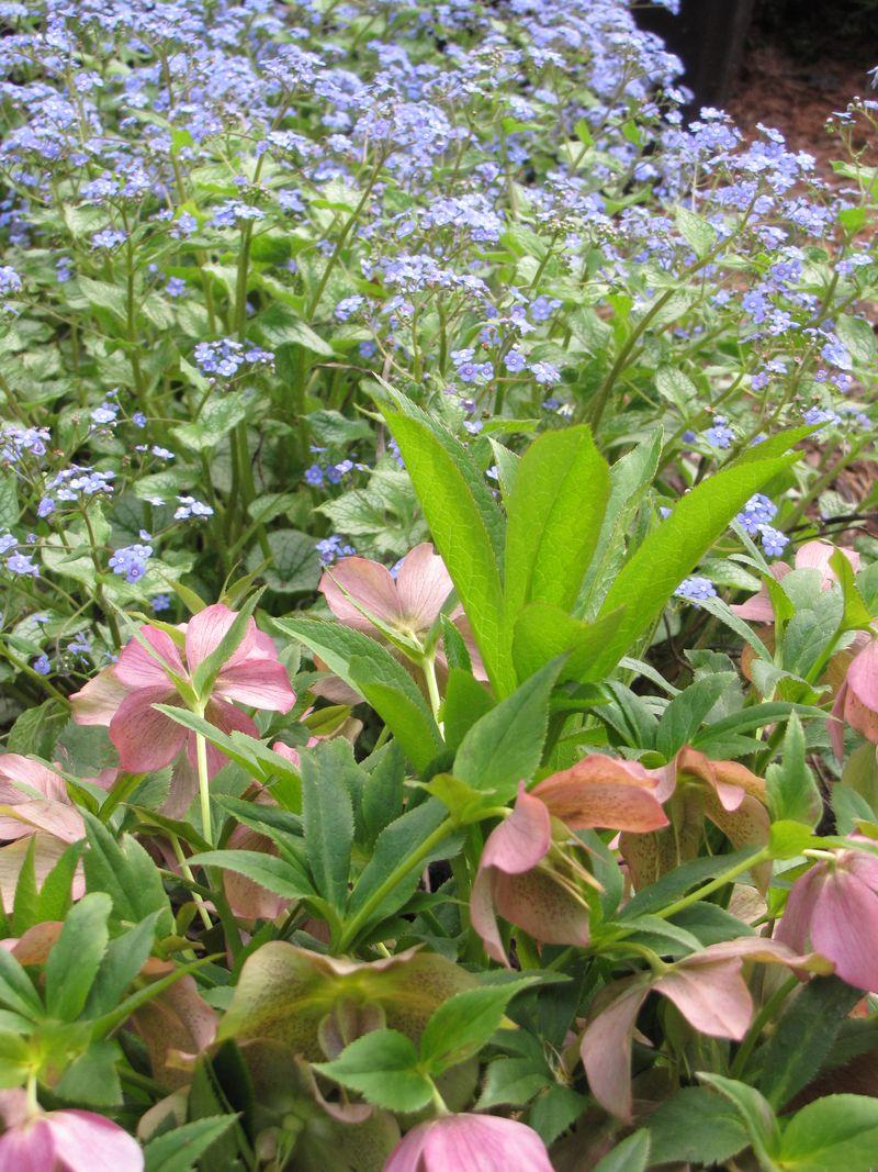 Blooms april 22 002