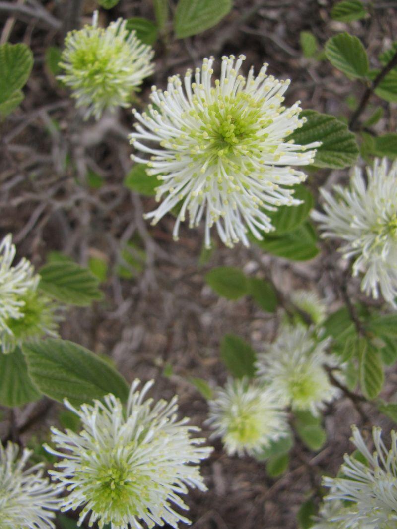 Blooms april 22 014