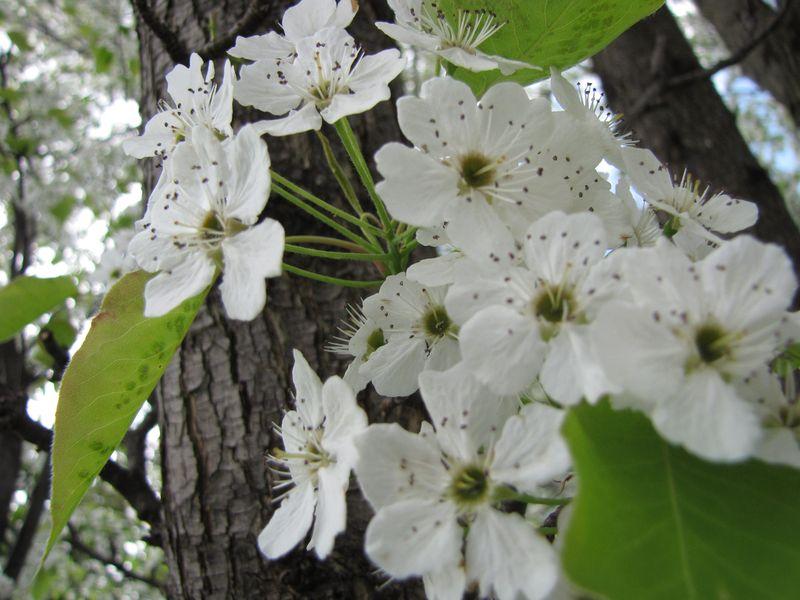 Blooms april 22 025