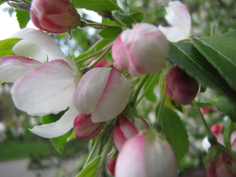 Blooms april 22 008