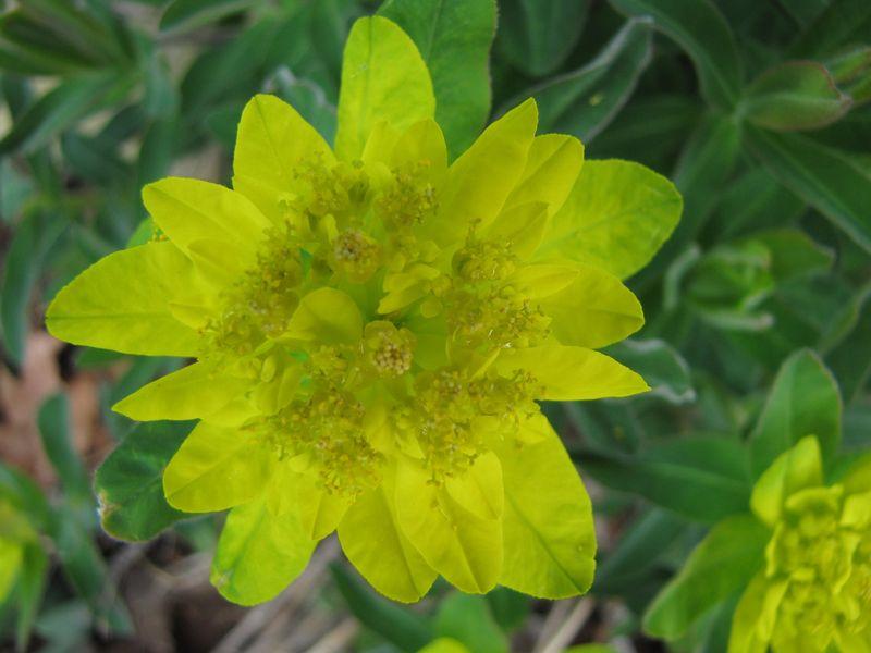 Blooms april 22 033