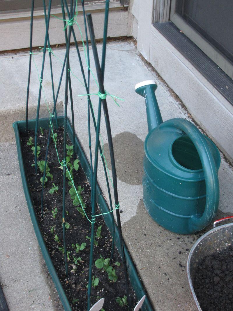 Planting day may 15 006