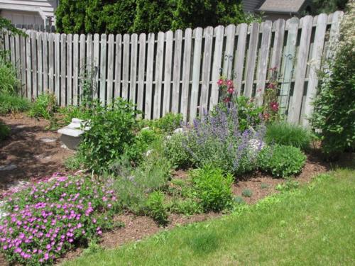 Garden Jun 4 2009 016