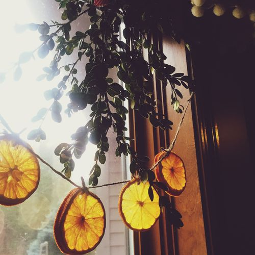 Boxwood in the window