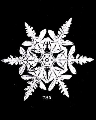 89924-wikimedia3